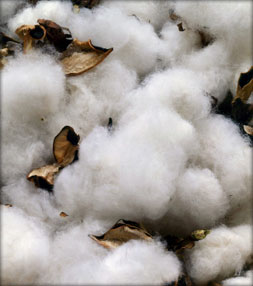 stock-photo-2931210-cotton